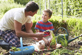 Father And Son Harvesting Carrots — Stock Photo