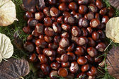 Shot Of Conkers — Stock Photo