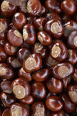 Full Frame Shot Of Conkers — Stock Photo