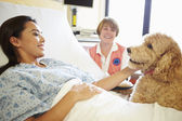 Pet Therapy Dog Visiting Female Patient In Hospital — Stock Photo