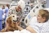 Therapy Dog Visiting Young Male Patient In Hospital — Stock Photo