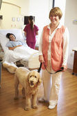 Portrait Of Pet Therapy Dog Visiting Female Patient In Hospital — Stock Photo