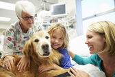 Young Girl Being Visited In Hospital By Therapy Dog — Stock Photo