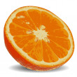 Slice of juicy orange 2 — Vector de stock #24542669