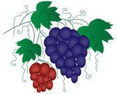 Weintraube zweig als gestalterisches element — Stockvektor