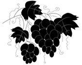 Silhuett av förgrena sig av druvor — Stockvektor