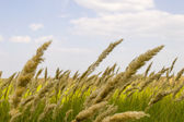 Field and grass close-up — Stock Photo