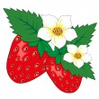 Strawberry with leaves and flowers — Imagen vectorial