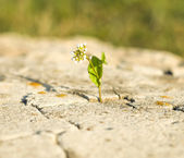 Small flower growing on a stone — Stock Photo