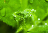 Macro photo of plant with dew drops — Stock Photo