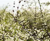 Background with flowering trees — Stock Photo