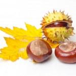 Chestnut — Stock Photo #13601319