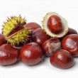 Chestnut — Stock Photo #14134230