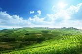 Vineyards in Piedmont, Italy — Stock Photo