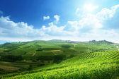 Vineyards in Piedmont, Italy — Stock Photo