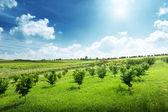Landscape of Piedmont, Italy — Stock Photo