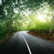 Empty road in jungle — Foto Stock