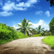 Road in jungle — Foto Stock