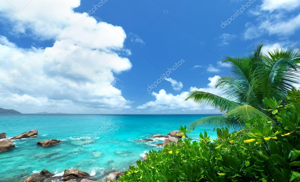Sea and tropical plants on La Digue island in Seychelles   Stock Photo #14148805
