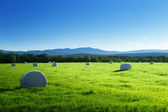 Field of harvested grass — Stock Photo