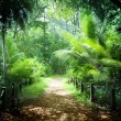 Way in jungle of Seychelles islands — Foto Stock