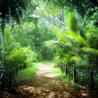 Way in jungle of Seychelles islands — Stockfoto