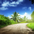 Road in jungle — Stockfoto
