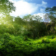 Sunset in jungle - Stock Photo
