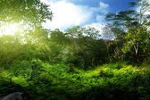 Sunset in jungle — Stock Photo