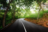 Empty road in jungle — Stockfoto