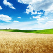 Wheat hills Tuscany, Italy - Stock Photo