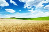 Wheat hills Tuscany, Italy — Stock Photo