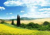 Field of yellow flowers Tuscany, Italy — Stock Photo