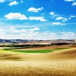 Hills of barley in Tuscany, Italy - Photo