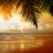 Sunset on the beach of caribbean sea — Stock Photo