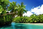 Lago y palmeras, mahe island, seychelles — Foto de Stock