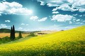 Campo de amarelo flores toscana, itália — Foto Stock