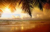 Pôr do sol na praia do mar das caraíbas — Foto Stock