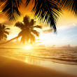 Sunset on the beach of caribbean sea — Stock Photo #16187771