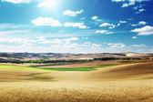 Hills of barley in Tuscany, Italy — Stock Photo