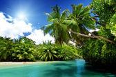 See und palmen, mahé, seychellen — Stockfoto