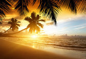 Sunset on the beach of caribbean sea — Stok fotoğraf