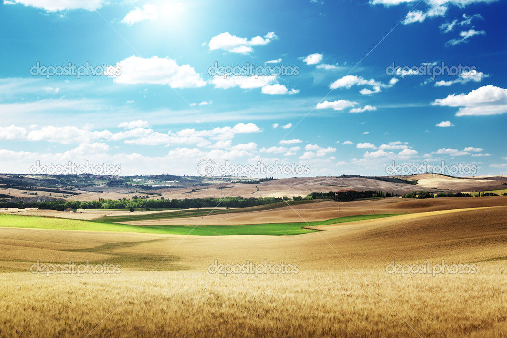 Hills of barley in Tuscany, Italy — Stock Photo #16187629