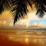 Sunset on the beach of caribbean sea — Stock Photo #16970379