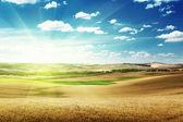 Heuvels van gerst in toscane, italië — Stockfoto