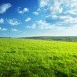 Field of spring grass and forest — Stock Photo #18391777