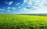 Campo de grama de primavera e floresta — Foto Stock