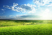Field of spring grass and forest — Stock Photo