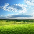 Field of spring grass and forest — Stock Photo #18927455