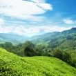 Teplantation Cameron highlands, Malaysia — Stock Photo #18927729